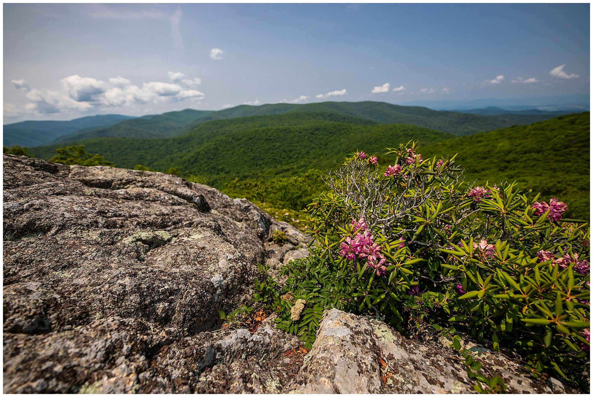 spy rock, misty saves the day, shenandoah national park, hike virginia